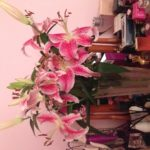 Beautiful flowers from a client on their return from their 3 week cruise!