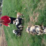 Feeding down at the farm!